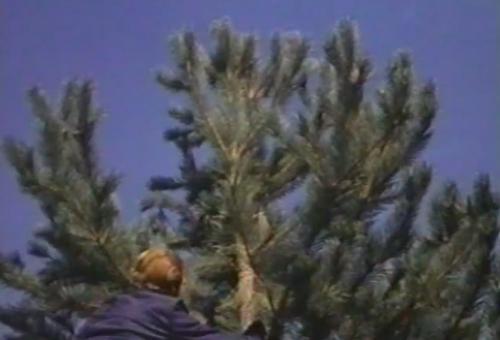 Bionic Tree