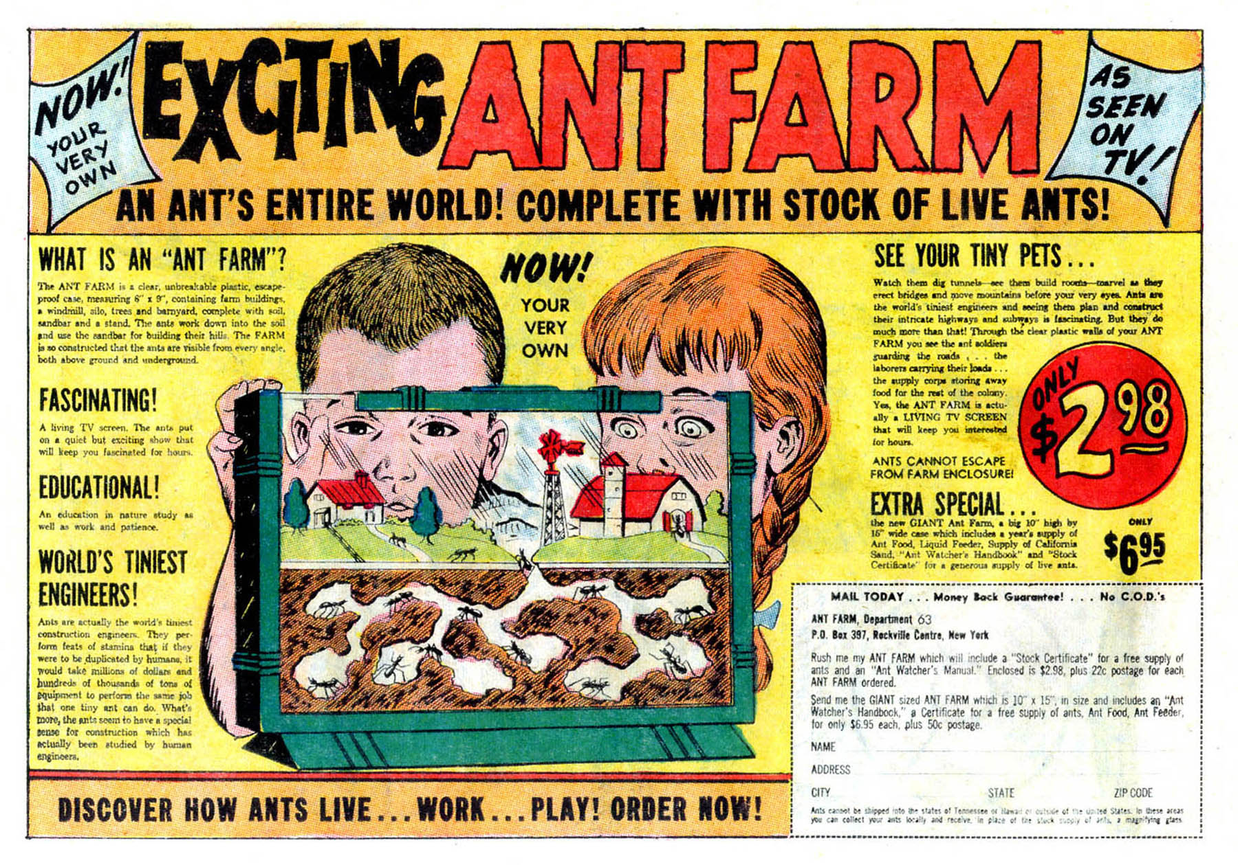 Exciting Ant Farm